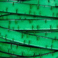 Bark 10mm Flat Leather Cord - Green - per inch