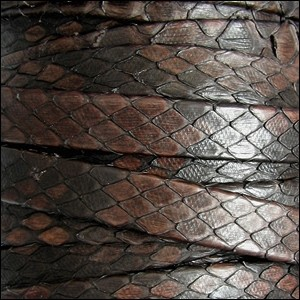 Genuine Snakeskin 10mm Flat Leather Cord - Dark Brown - per inch
