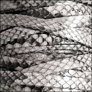 Genuine Snakeskin 5mm Flat Leather Cord - Silver