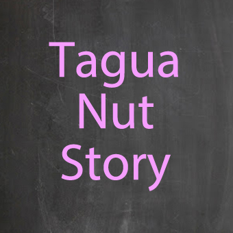 Tagua Nut Beads for jewelry making